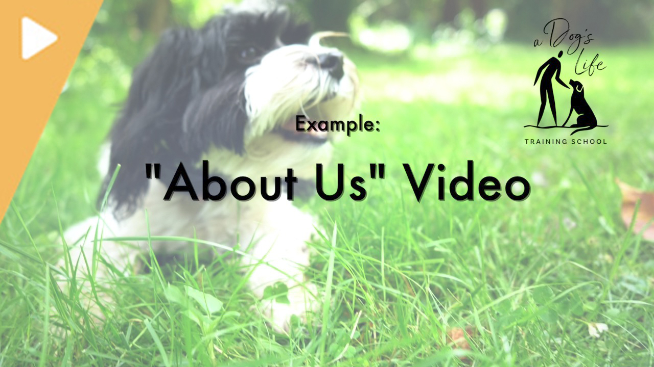 About Us - A Dog's life